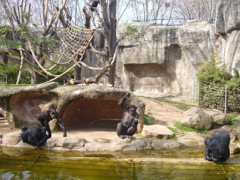Zoo_de_Barcelona_-_micos_2