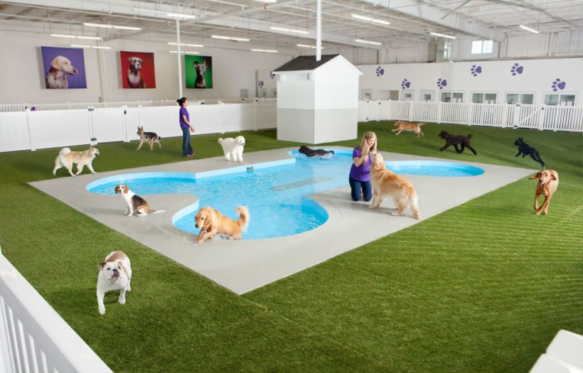 11.-Dog-play-area.jpg