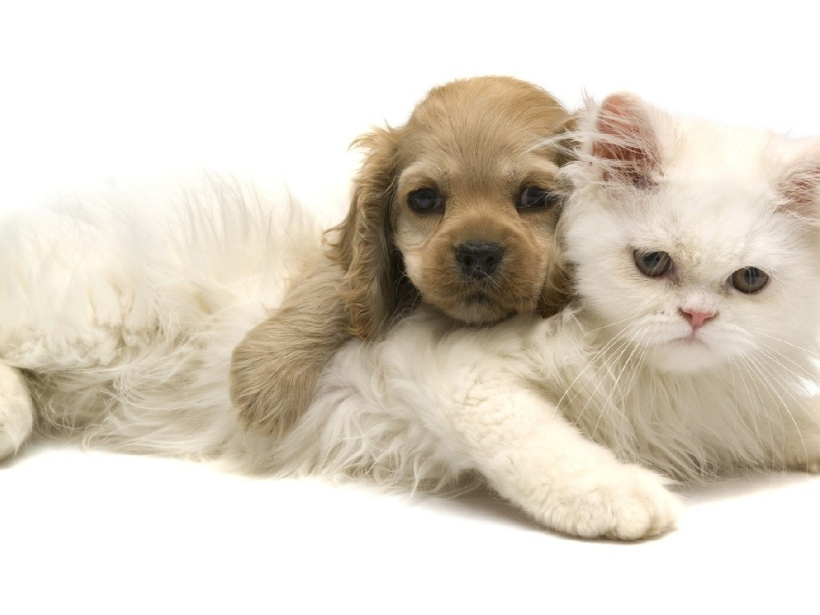 cat-kitten-dog-puppy-white.jpg