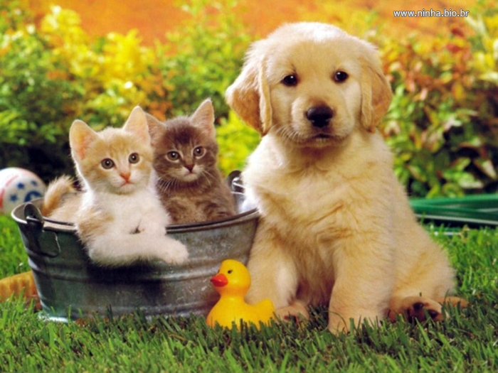 amizade-caes-gatos